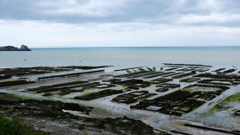 カンカルの牡蠣養殖場